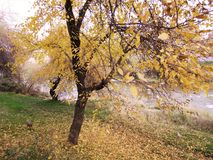 Parco di autunno fotografie stock libere da diritti