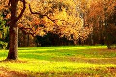 Parco di autunno Immagini Stock Libere da Diritti