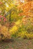 Parco di autunno Fotografia Stock
