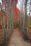 Parco di autunno Fotografia Stock Libera da Diritti
