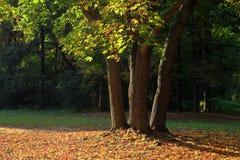 Parco di autunno Immagini Stock