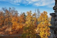 Parco di autunno con gli alberi gialli in Cesis, Lettonia fotografia stock