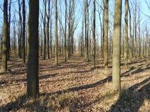 Parco di autunno con le foglie cadute gialle Immagini Stock