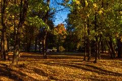 Parco di autunno coperto di foglie cadute immagini stock