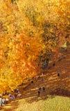 Parco di autunno da una vista di occhio dell'uccello immagine stock
