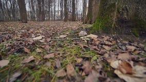 Parco di autunno Fogli caduti sulla terra Tiro del carrello stock footage