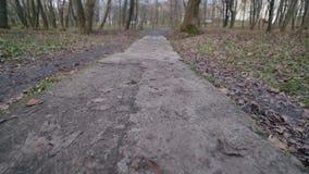 Parco di autunno Fogli caduti sulla terra Tiro del carrello archivi video