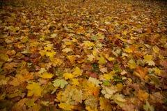 Parco di autunno nella vecchia città di Europa in tallin Fotografia Stock