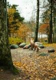 Parco di autunno nella vecchia città di Europa in tallin Immagini Stock Libere da Diritti