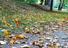 Parco di autunno in pieno delle foglie gialle e marroni Fotografie Stock Libere da Diritti