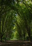 Parco di Bushi Fotografie Stock Libere da Diritti