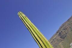 Parco di Cactualdea in Gran Canaria Fotografia Stock