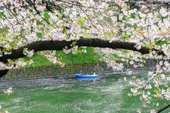Parco di Chidorigafuchi durante la stagione primaverile Fotografie Stock Libere da Diritti