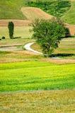 Parco di Colfiorito (Umbria) Royalty Free Stock Image