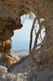 Parco di Ein Gedi fotografie stock