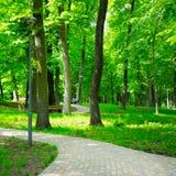 Parco di estate con i percorsi di camminata Immagini Stock Libere da Diritti