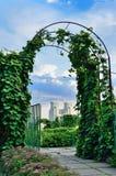 Parco di estate in Kyiv Immagini Stock Libere da Diritti
