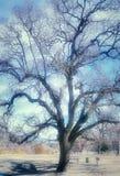 Parco di Frazier, CA Fotografie Stock