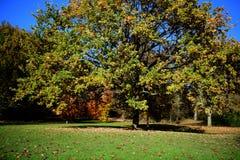 Parco di Holywells, Regno Unito, colori delle foglie di autunno Fotografie Stock Libere da Diritti