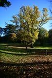 Parco di Holywells, Regno Unito, colori delle foglie di autunno Fotografia Stock