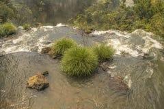Parco di Iguazu dalla cima delle cascate Fotografia Stock Libera da Diritti