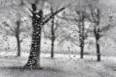 Parco di inverno con la siluetta dell'albero attraverso le gocce di pioggia in una neve Immagine Stock