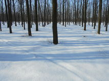 Parco di inverno di Snowy con gli alberi con le foglie cadute Immagini Stock Libere da Diritti