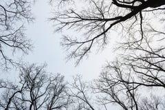 Parco di inverno di Snowy in foschia Fotografie Stock Libere da Diritti