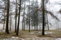 Parco di inverno di Snowy in foschia Fotografia Stock Libera da Diritti
