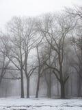 Parco di inverno di Snowy in foschia Immagine Stock