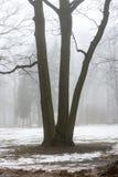 Parco di inverno di Snowy in foschia Fotografia Stock