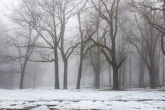 Parco di inverno di Snowy in foschia Immagini Stock Libere da Diritti