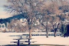 Parco di inverno e paesaggio degli alberi Immagine Stock Libera da Diritti