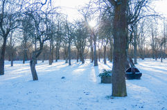 Parco di inverno nel giorno Immagine Stock