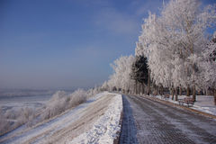 Parco di inverno in Siberia Fotografie Stock
