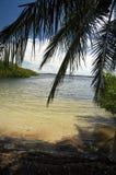 Parco di John Pennekamp Coral Reef State Immagini Stock Libere da Diritti
