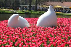 Parco di Keukenhof nei Paesi Bassi Immagini Stock Libere da Diritti