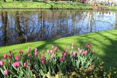 Parco di Keukenhof nei Paesi Bassi Fotografie Stock Libere da Diritti