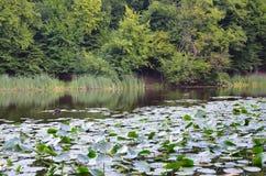 Parco di Kiev Goloseevskiy Fotografia Stock