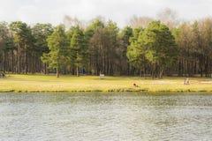Parco di Kuzminsky Fotografia Stock Libera da Diritti