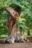 Parco di Londra Greenwich in autunno Immagini Stock
