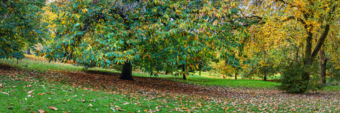Parco di Londra Greenwich in autunno Immagini Stock Libere da Diritti