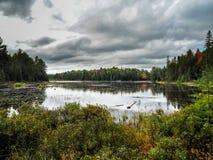 Parco di Marsh Beaver Pond Algonquin Provincial fotografia stock
