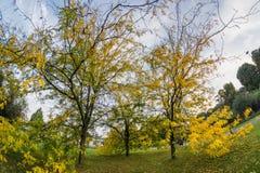 Parco di Milano in autunno Immagine Stock