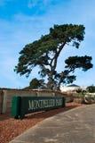Parco di Montpellier, Geelong, Victoria, Australia Fotografia Stock