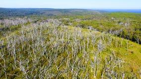 Parco di Otway Nationa del capo, Australia Siluetta dell'uomo Cowering di affari Immagine Stock Libera da Diritti