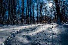 Parco di Overpeck Fotografia Stock