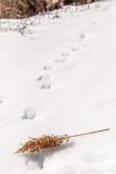 Parco di Overpeck Fotografia Stock Libera da Diritti