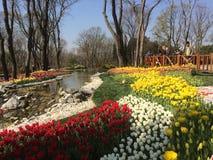 Parco di paradiso Fotografia Stock