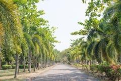 Parco di Phuket Fotografie Stock Libere da Diritti